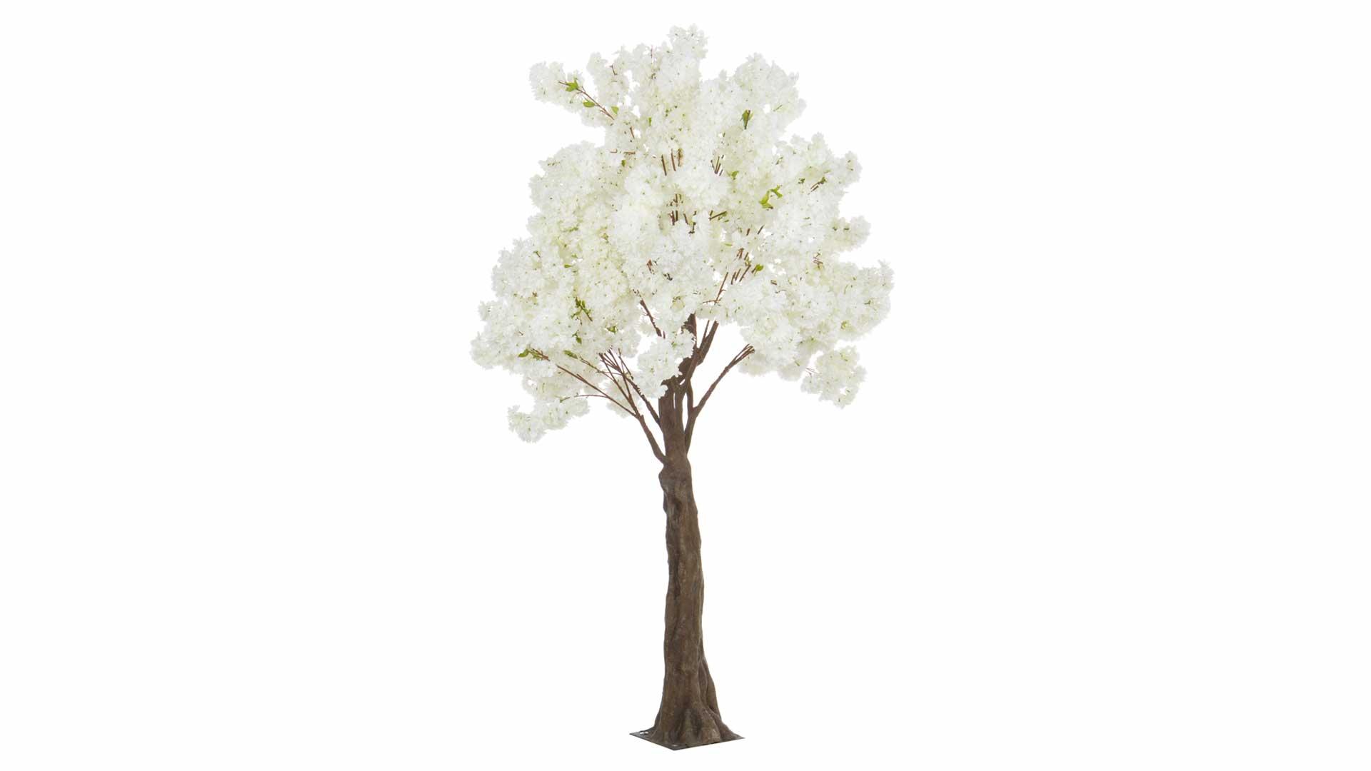 immagine in evidenza della pagina Albero begonia bianco