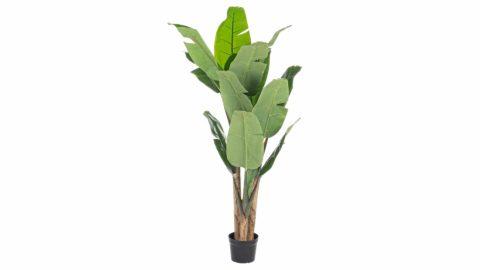 immagine del prodotto Pianta banano con vaso