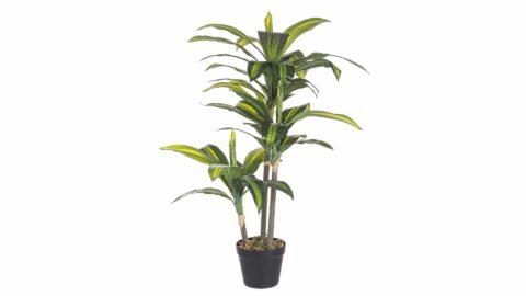 immagine del prodotto Pianta brazilian con vaso