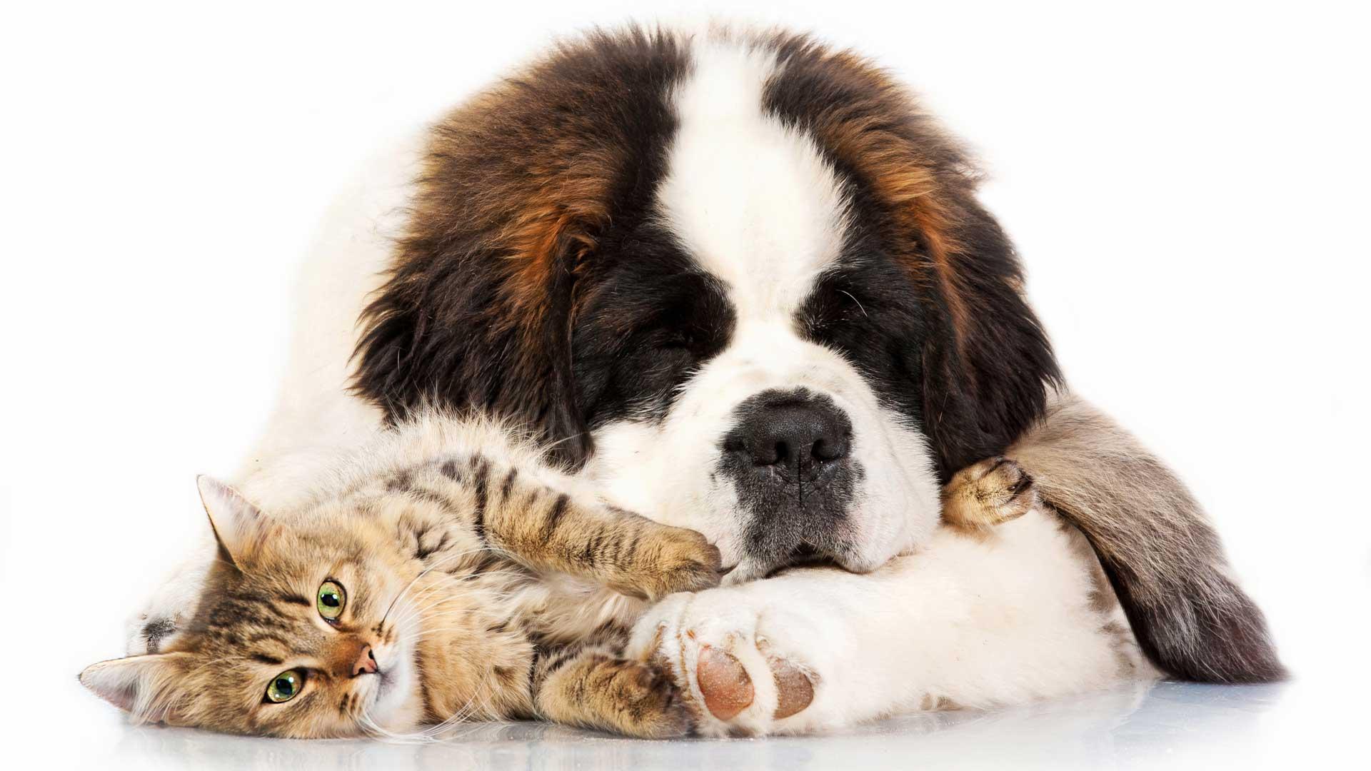 immagine rappresentativa del reparto Pet del brico ok corigliano