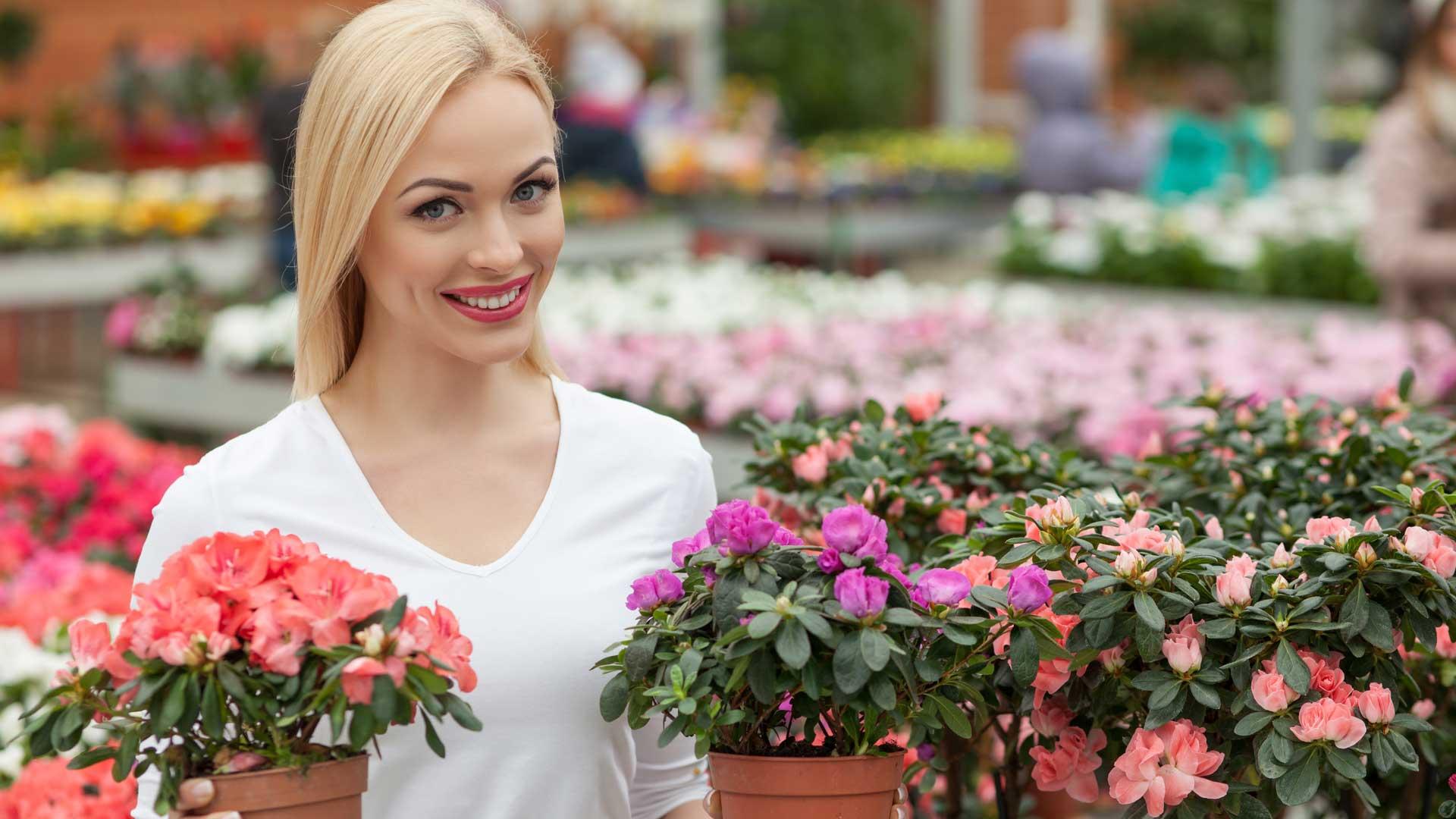 immagine rappresentativa del reparto Piante e fiori del brico ok corigliano