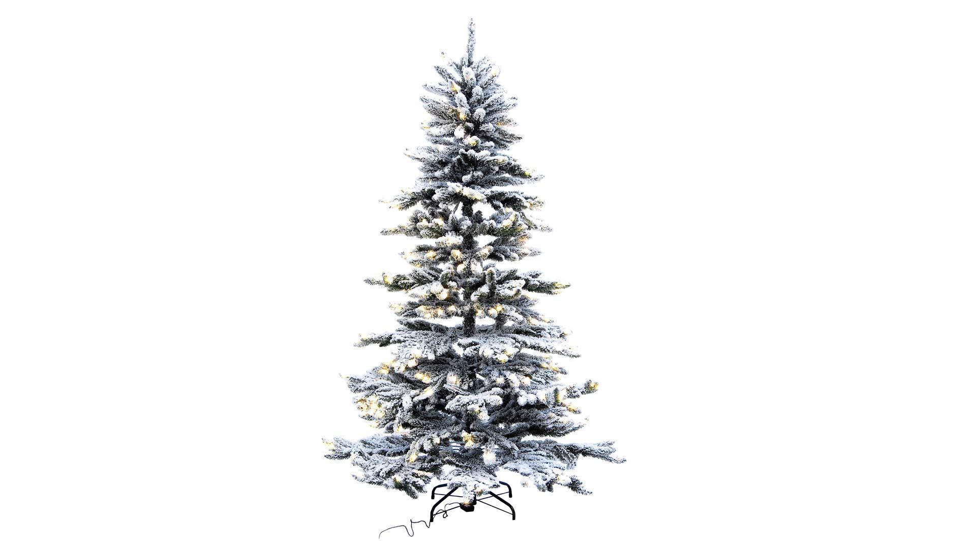 immagine in evidenza della pagina Albero di Natale Oregon